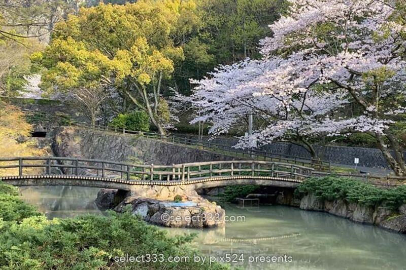 不動の滝カントリーパーク満開の桜並木の撮影!桜の満開時期は?不動の滝ドローン撮影