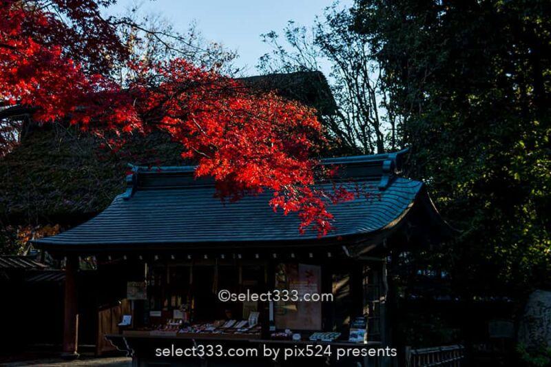 深大寺の紅葉撮影!深大寺周辺の散歩エリアと秋の紅葉スポット!調布エリアの観光地