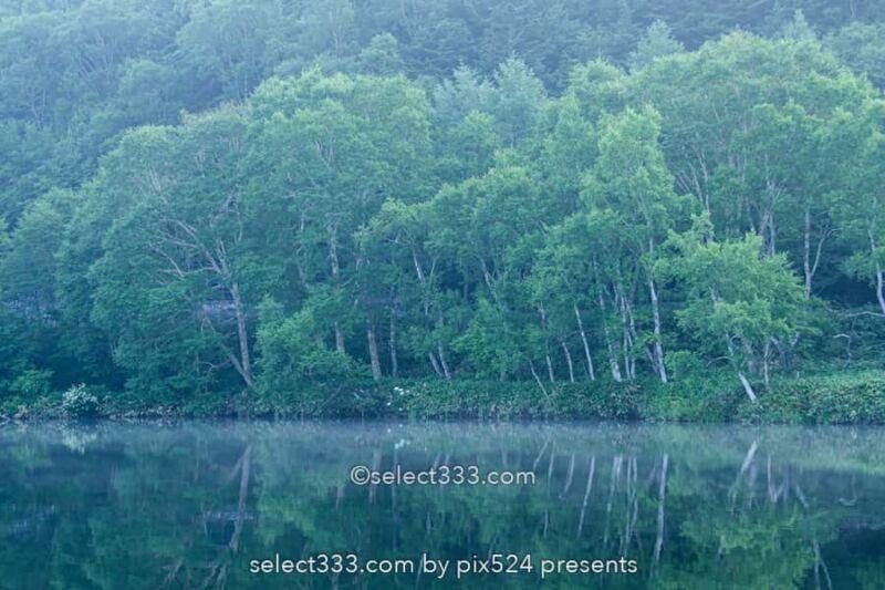木戸池の美しい朝霧風景!志賀高原の新緑リフレクション撮影地!森林の鏡面風景