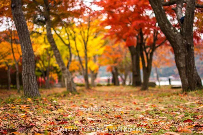 もみじ回廊の紅葉撮影!ライトアップした河口湖の紅葉スポット!見頃の富士五湖紅葉