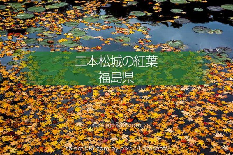 二本松城の紅葉撮影!福島県の名城霞ヶ城公園の紅葉の見頃風景!福島県の秋の景色