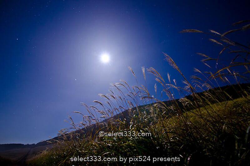 仙石原のススキ草原で中秋の名月を!月夜も美しい箱根の景勝地!ススキと月の撮影