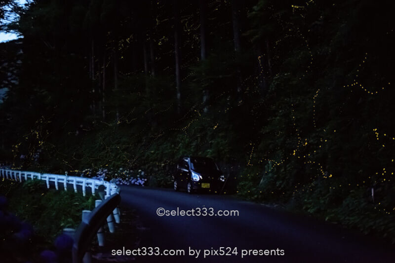 国道439号線のヒメボタル!四国の酷道で見られる幻想的な蛍の光!ヒメボタルの比較明合成