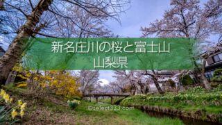 新名庄川の桜並木と富士山の撮影!忍野の桜の満開・見頃はいつ?富士山の麓の桜の風景