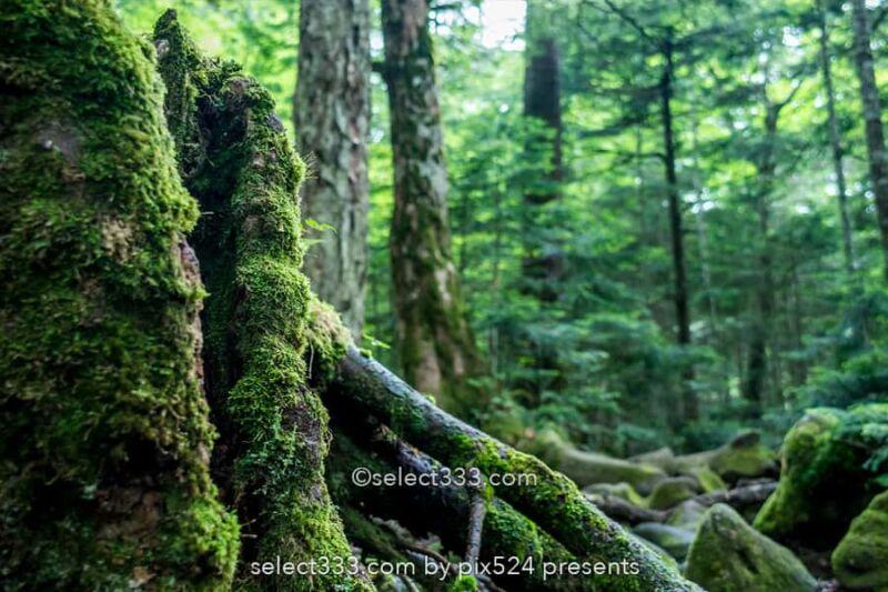 八ヶ岳・諏訪エリアを巡るドライブルート!長野県一泊撮影旅!高ボッチ高原と御射鹿池