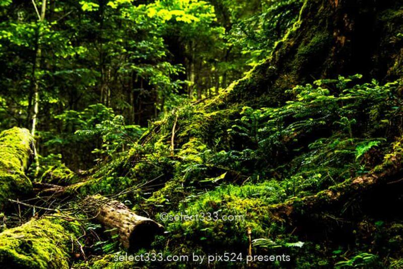 苔の森と白駒の池!苔に囲まれ原生林の中で古代を感じる聖地!異世界へ吸い込まれる森林