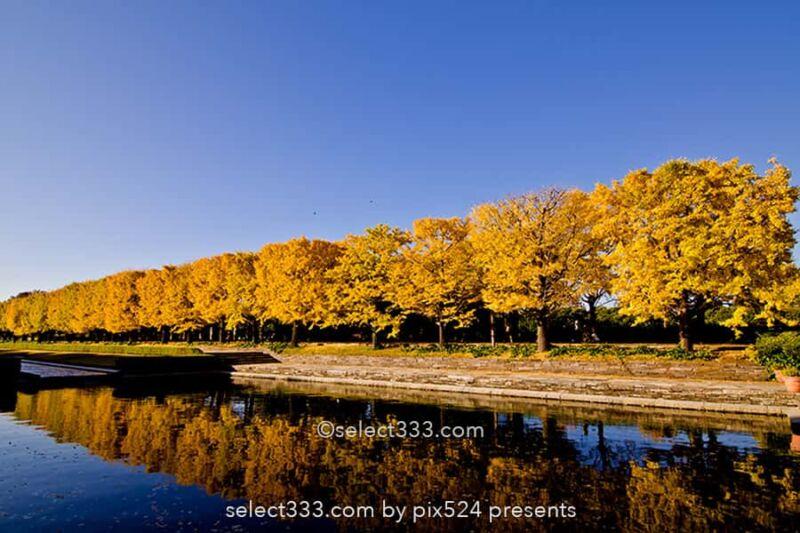 国営昭和記念公園の紅葉撮影!イチョウ並木と日本庭園の紅葉!都内最大の秋の風景