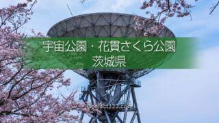 さくら宇宙公園・花貫さくら公園!高萩エリアの満開の桜撮影!茨城県の桜の名所