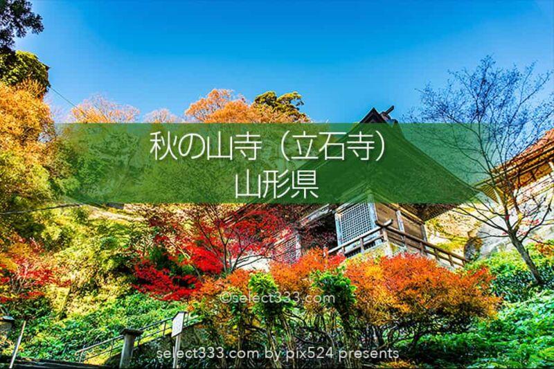 山寺の紅葉の撮影!立石寺の大イチョウの黄葉と山寺の秋の風景!山形県の紅葉スポット