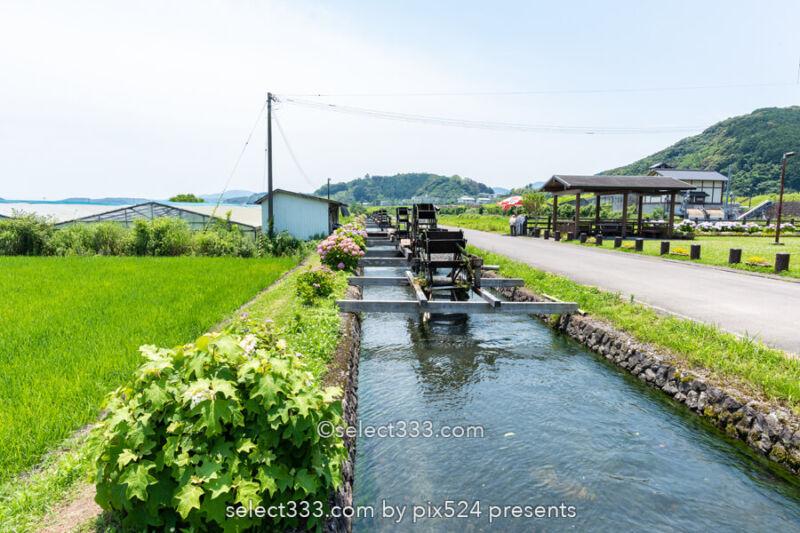安並水車の里(四ケ村溝の水車)紫陽花と水車ののどかな風景!四万十市の撮影スポット