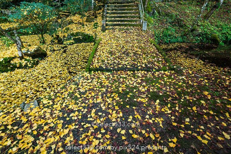 瑞應寺の紅葉撮影!山門の紅葉と樹齢800年の大イチョウの黄葉!新居浜市の紅葉撮影地