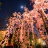 浅草寺で桜を撮影したりする…都内の桜は満開で春真っ盛りお花見の季節