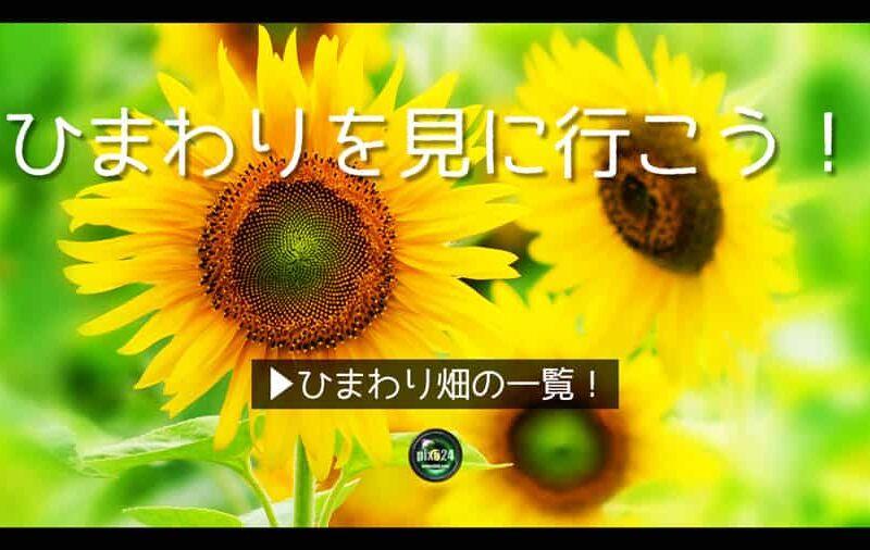 全国のひまわり畑!都道府県別|写真を楽しむブログ