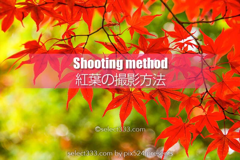 秋の被写体もみじを撮ろう!紅葉の見頃に色々な撮影方法で!ボケや逆光・シルエット!