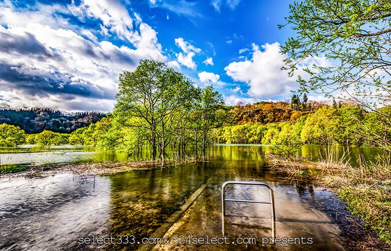 撮影期間限定風景〜水没林が撮影できる山形県白河ダム湖岸公園!アクセスと撮影攻略