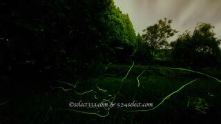 ホタルの聖地 自然生息のホタルが乱舞!群馬県箱島ホタルの里へのアクセスと撮影攻略