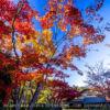 国営昭和記念公園 日本庭園 紅葉の見頃に秋の風景を撮影しよう!紅葉の時期と撮影攻略