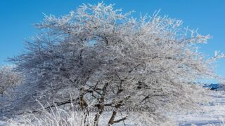 雪景色を撮ろう!積雪や雪の降る様子!雪景色撮影のコツは?冬ならではの風景撮影に!
