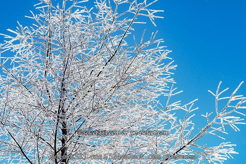 雪景色を撮ろう!積雪や雪の降る様子!雪景色撮影のコツは?冬景色霧氷・樹氷・氷柱撮影