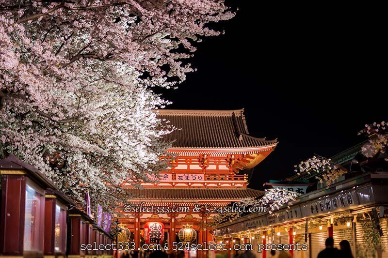 夜桜を浅草寺で撮ろう!夜の浅草寺撮影は桜の満開見頃がお勧め!都内のお手軽夜桜撮影地