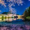 流れる桜の花びら撮影!桜の撮影テクニック川面の桜撮影方法!シャッタースピードを調
