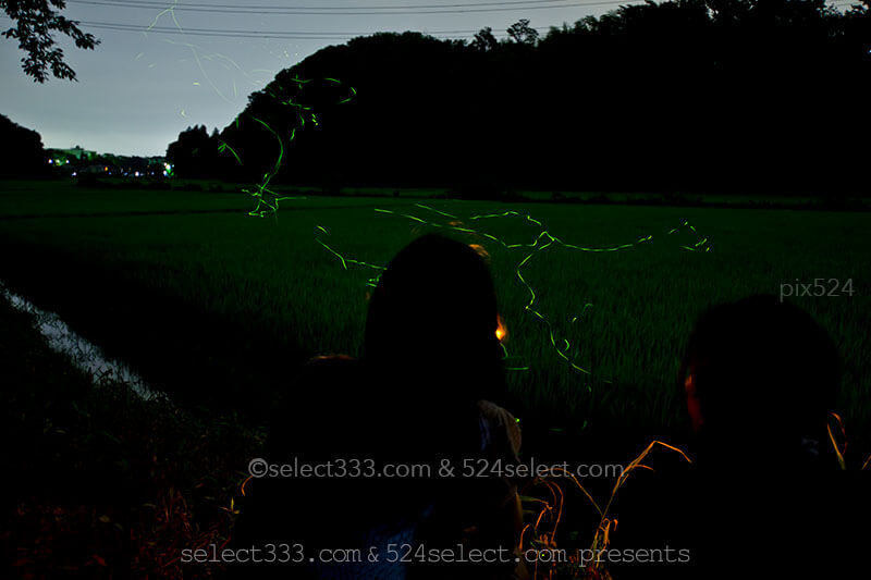 長時間露光で撮るホタルの撮影方法!蛍が飛ぶ様子を撮影しよう!シャッタースピード調整