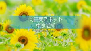 東京近郊のひまわり畑とひまわり撮影地!一面に広がる夏色の景色!夏のドライブと観光に