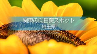 埼玉県のひまわり観光・撮影地は?埼玉県のひまわり畑の名所は?埼玉県のひまわり畑巡り