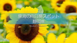 静岡県のひまわり観光・撮影地は?静岡県のひまわり畑名所巡り!夏の日帰り旅行スポット