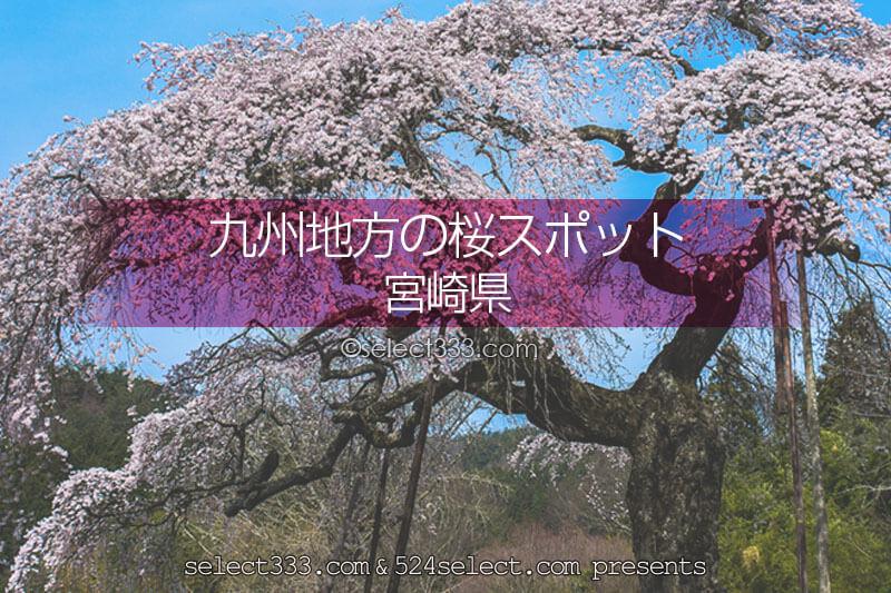宮崎県の桜の名所はどこ?桜並木が圧巻!宮崎県の桜撮影スポット!桜がある宮崎県の旅行先