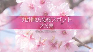 大分県の桜撮影スポットはどこ?大分県の桜の名所に行こう!大分の桜撮影旅行チェック!