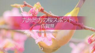 佐賀県の桜の撮影スポットはどこ?佐賀県の桜の名所を探そう!春の佐賀県観光は桜ありきで