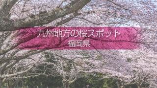 福岡県の桜の名所はどこ?福岡県の桜撮影スポットでお花見を!春の福岡旅行で桜の撮影!