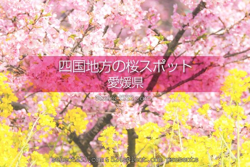 愛媛県の桜スポットは?愛媛県の桜の名所や撮影スポットに行こう!桜の風景撮影旅行に!