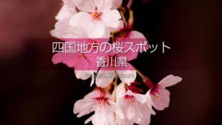 香川県の桜の名所はどこ?香川県の桜撮影スポットに行こう!うどん県の春の桜鑑賞観光