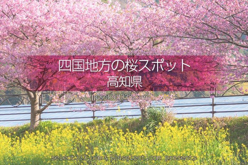 高知県の桜の名所はどこ?高知県の桜撮影スポットを探そう!春の高知県桜のある観光地