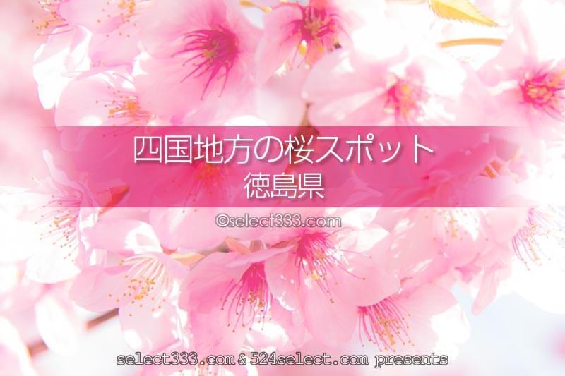 徳島県の桜の撮影スポットはどこ?徳島県の桜の名所を探そう!春の徳島県桜の観光地