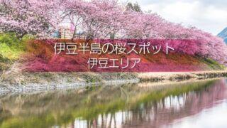 伊豆半島桜の撮影スポットや桜の名所は?早めの開花で春先取り!混雑回避で伊豆桜撮影を!