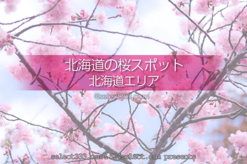 北海道の桜の名所は?北海道旅行で桜の撮影スポットを巡ろう!5月に楽しめる北海道の桜