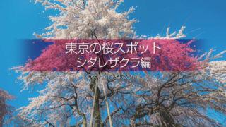 都内のシダレザクラを見に行こう!東京のしだれ桜の名所と撮影!しだれ桜の満開時期