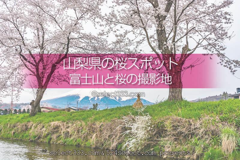 山梨県の桜撮影地!富士山と桜撮影スポットと富士五湖桜巡り!富士山と桜のスポット周遊