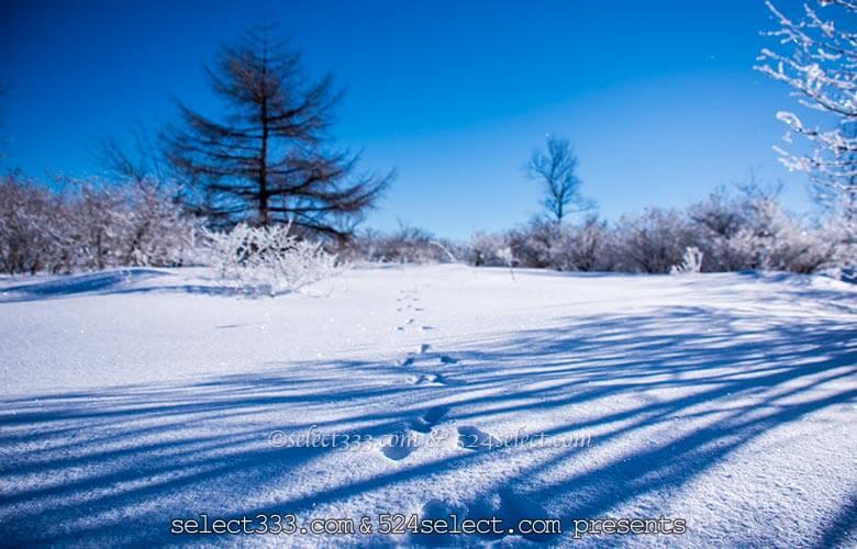 冬の絶景地霧ヶ峰ビーナスライン雪景色と雪原を撮影しよう!冬の雪道ドライブを楽しむ