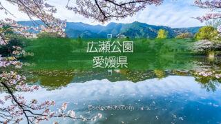 愛媛県新居浜市広瀬公園の桜満開!桜の見頃にお花見と撮影を!新居浜市広瀬歴史記念館