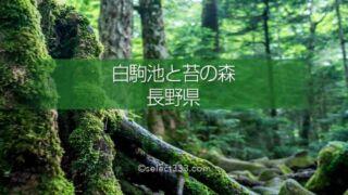 原生林の中で古代を感じる聖地!長野県苔の森白駒の池へのアクセスと撮影攻略