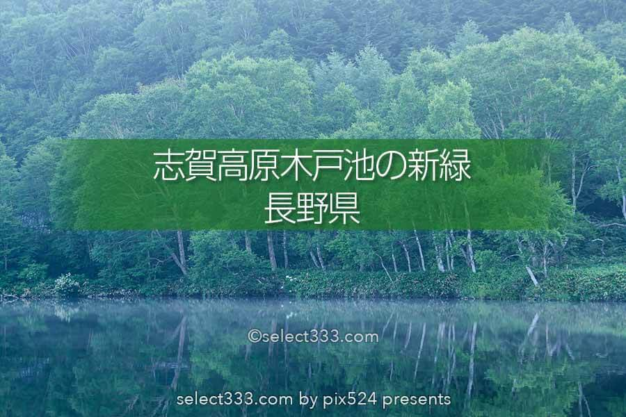 木々の鏡面撮影地!長野県志賀高原木戸池の新緑リフレクション!美しい朝霧と池の風景
