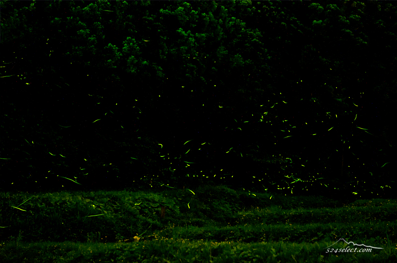 長時間露光で撮るホタルの撮影方法!星が撮れればホタルも撮れる!