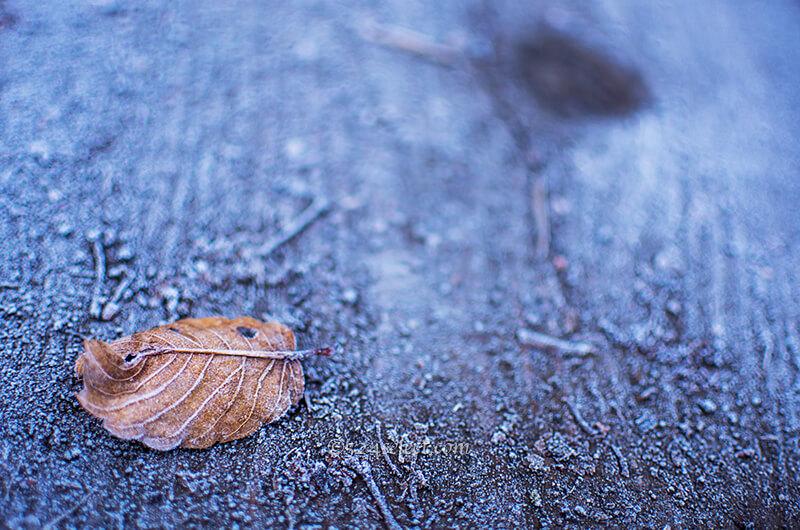 落ち葉の霜を撮影してみよう!冷えた朝の美しい被写体を探す!冬の被写体撮影攻略
