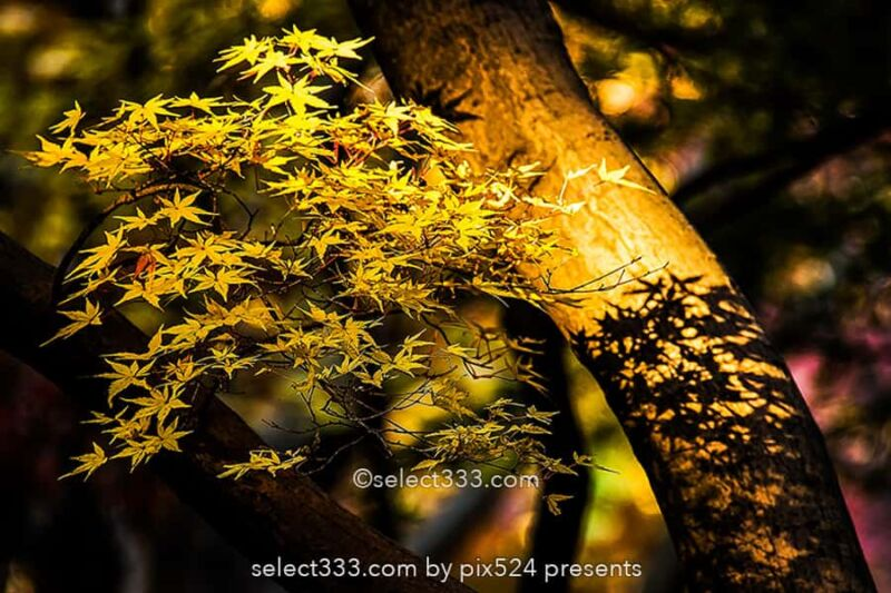 もみじの撮影!紅葉の見頃に色々な撮影方法で秋の被写体を撮影!ボケ・逆光・シルエット