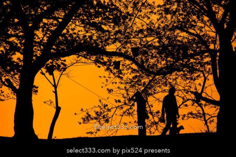 夕焼け空のシルエット撮影方法!影絵や切り絵に見える風景撮影!夕暮れの逆光風景